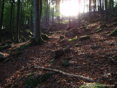 44877-more-magical-forest-scenery-frankenstein-germany
