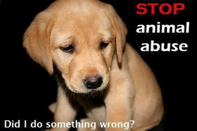 Stop-animal-abuse-animal-rights-10822026-500-333