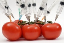 genetically-modified-food-tomatoes-syringes-photo