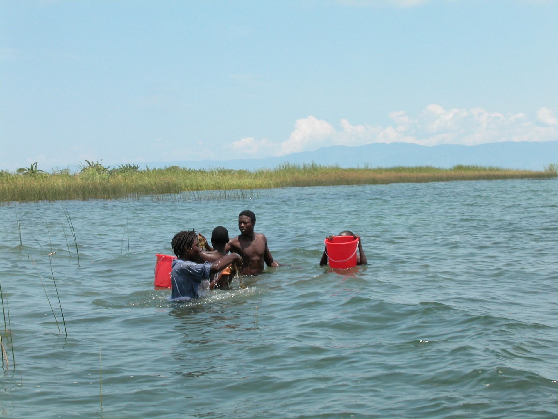 Collecting hydrilla in Lake Tanganyika